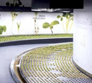 Hortus-Fico-Bologna-CWS