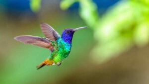 recensione-libro-il-colibrì