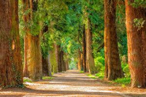 L-donna-degli-alberi