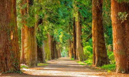 Recensione libro La donna degli alberi di Lorenzo Marone