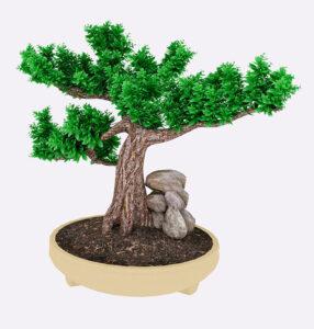 Regali-Natale.last-minute-bonsai