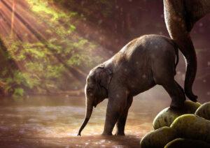 Il-viaggio-dell-elefante