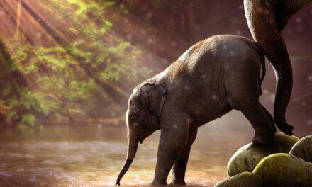 Recensione libro Il viaggio dell'elefante