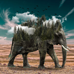 recensione-libro-il-viaggio-dell-elefante-trasfromazione